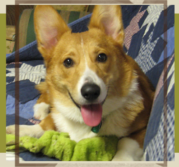 St. Louis Corgi Rescue
